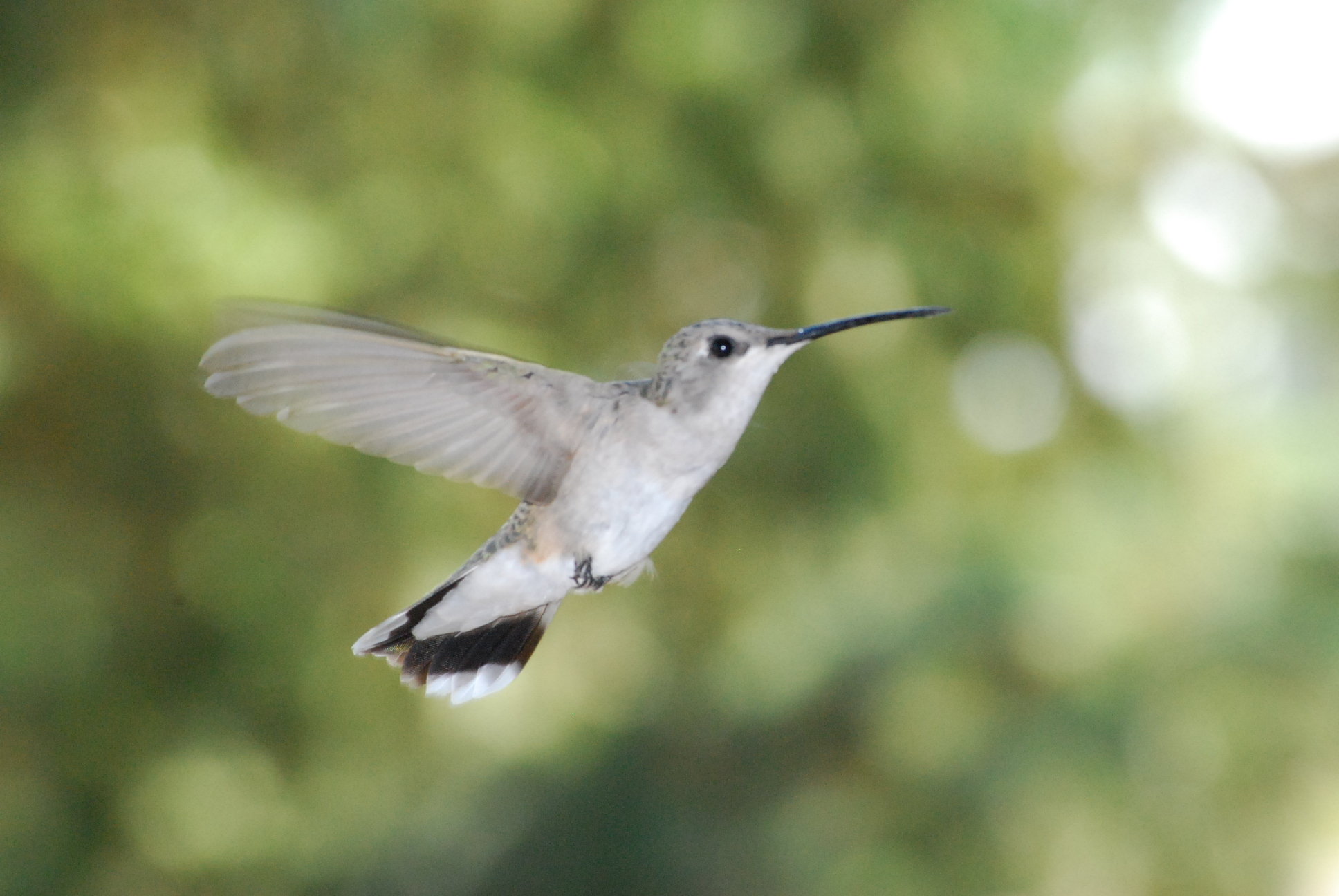 How Hummingbird affects SEO writing